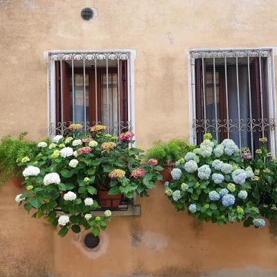 Führung durch die Gärten Venedigs: verstecktes Grün in der Stadt aus Stein