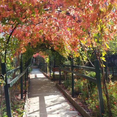Rosen- und Weinlaubengang im Garten der Dominikanerinnen