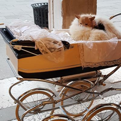 alle machem mit beim Karneval: kostümierter Hund