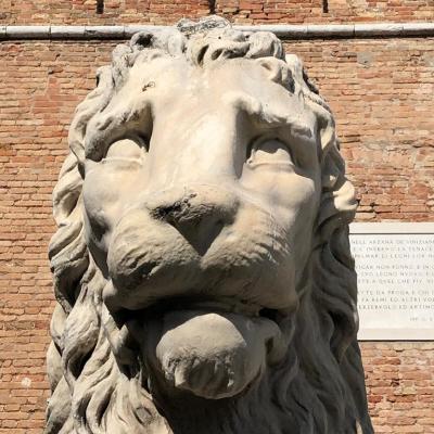 un leone a Venezia