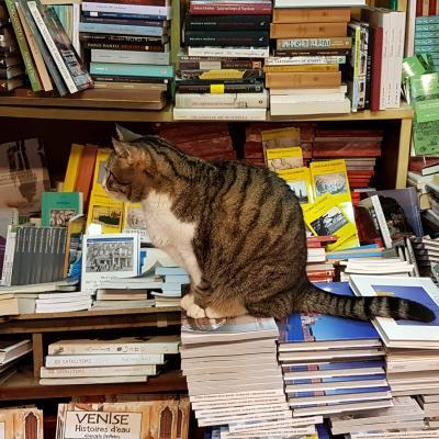 Buchhandlung Acqua Alta in Castello mit Katze