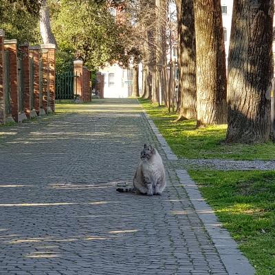 passeggiata di gatto nei giardini di Castello