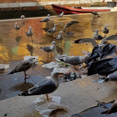 Moewenparty am Rialto beim Fischmarkt