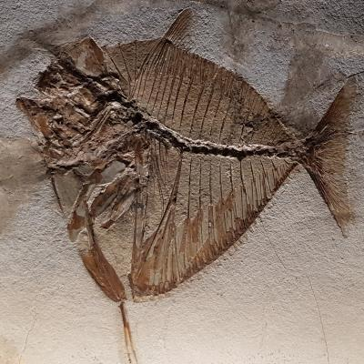 Fossil, Naturkundemuseum, Fondaco Turchi